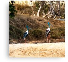 Brolgas, male and female Canvas Print