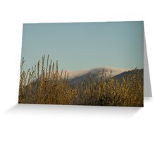 91416 high winds Greeting Card