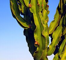 Cactus with moon by Ludwig Wagner