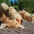 Ginger cat lying on garden path by turniptowers
