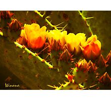 Fiery Cacti Blooms Photographic Print