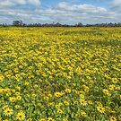 Spring in Yan Yean Country Victoria by Pauline Tims