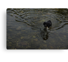 Crystal Clear Water Play - the Splashing Puppy Canvas Print