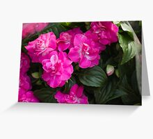 peony in spring Greeting Card