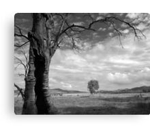 Scary Tree - Gunyah Road, Wilmington. Canvas Print