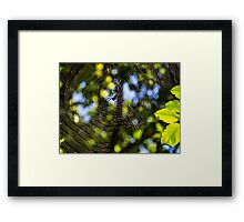 Spider In Its Web Framed Print