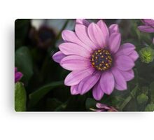 colored daisy in spring Metal Print