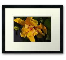 yellow lily Framed Print