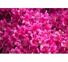flowers in spring Photographic Print