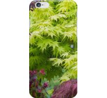 maple in spring iPhone Case/Skin