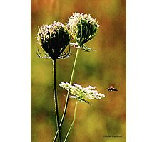 Queen Anne's Lace Digital 2 Photographic Print