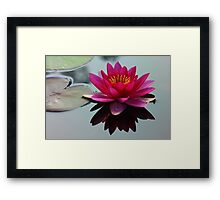 Waterlily on the Pond Framed Print