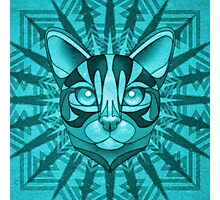 Minty Bengal Photographic Print