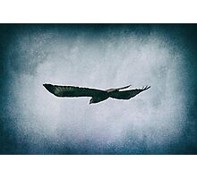 Soaring through the Sky Photographic Print