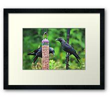 Young jackdaws on bird feeder Framed Print