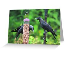Young jackdaws on bird feeder Greeting Card