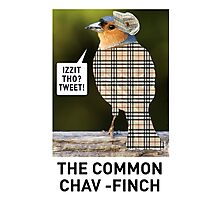 CHAV-FINCH GREETING CARD Photographic Print