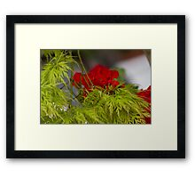 flower and maple Framed Print