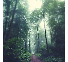 Waldweg - Forest Path Photographic Print