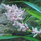 Stream Lillies At Lamington by Michael Matthews