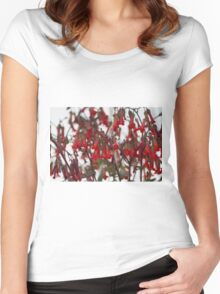succulent plant Women's Fitted Scoop T-Shirt