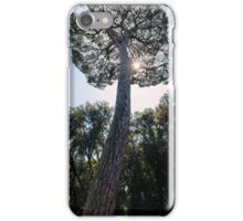 Whispers of Autumn iPhone Case/Skin