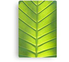 Leaf texture Canvas Print