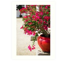Bougainvillea flowers in a patio Art Print