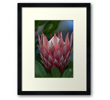 exotic flower Framed Print