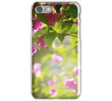 Bougainvillea flowers in a garden in a sundown light iPhone Case/Skin
