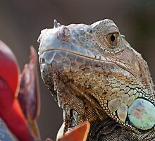 Green Iguana by Thomas F. Gehrke