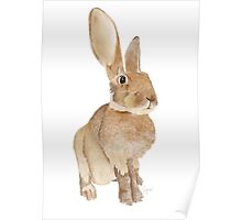 Hedley the Hare Poster
