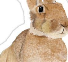 Hedley the Hare Sticker