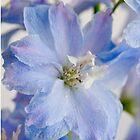 Blue Bayou by Catherine Hamilton-Veal  ©