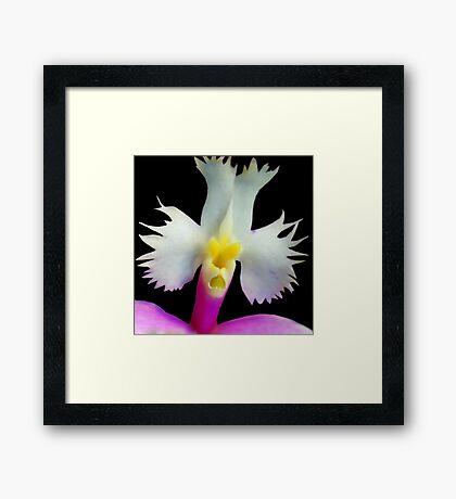 Beaker - Orchid Alien Discovery Framed Print