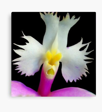 Beaker - Orchid Alien Discovery Canvas Print