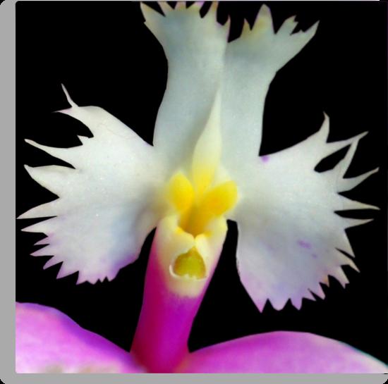 Beaker - Orchid Alien Discovery by ©Ashley Edmonds Cooke