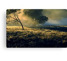 Near Mount Field National Park Canvas Print