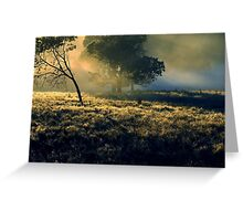 Near Mount Field National Park Greeting Card