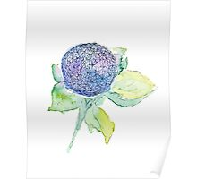 blue and purple hydrangea flower watercolor painting Poster