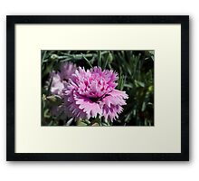 flower in spring Framed Print