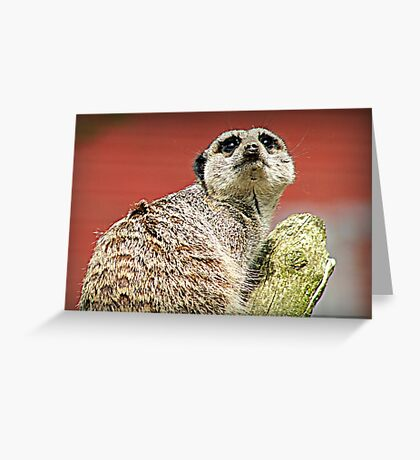 High Alert Greeting Card