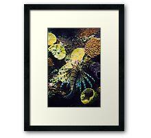 Scorpionfish Framed Print