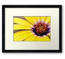 African Daisy Yellow Framed Print