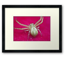 Spider on Flower Framed Print