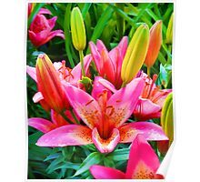 Electric Pink Lilies Poster