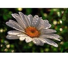 Daisy Rain Photographic Print