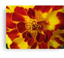 Mary Gold Canvas Print