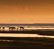 Marsh ponies Loughor estuary by leightoncollins