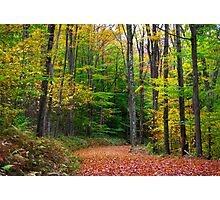 Autumn, Butternut Hollow Road Photographic Print